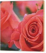 Apricot Beauty Wood Print