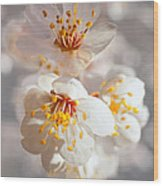 Apricot Blooms Wood Print