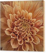 Apricot Dahlia Wood Print