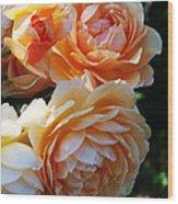 Apricot Dahlias Wood Print