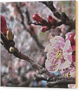 Apricot Floral Wood Print
