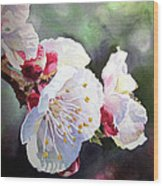 Apricot Flowers Wood Print by Irina Sztukowski