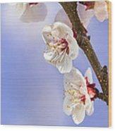 Apricot Flowers Wood Print