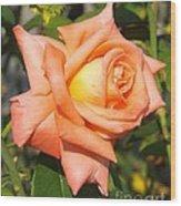 Apricot Nectar Rose Wood Print
