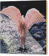 Apricot Wings Wood Print