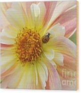 April Heather Dahlia With Ladybug Wood Print