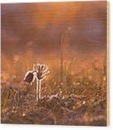 April Morning Wood Print