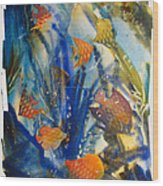 Aquarium 2 Archived Work Wood Print by Charlie Spear