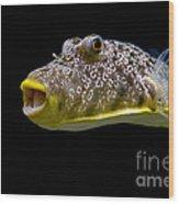 Aquarium Fish Wood Print