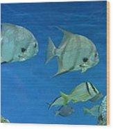 Aquatic Blues Wood Print