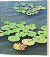 Aquatic Plants Wood Print