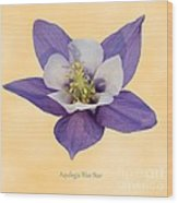 Aquilegia 'blue Star' Wood Print