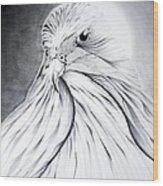 Arabian Falcon Wood Print