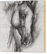 Arabian Horse Drawing 12 Wood Print