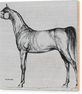 Arabian Horse Drawing 34 Wood Print