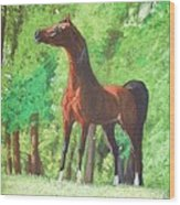 Arabian Horse In A Forest Clearing Wood Print