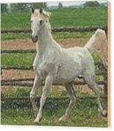 Arabian Horse Portrait In Pastels Wood Print