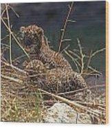 Arabian Leopard Panthera Pardus Cubs Wood Print