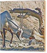 Arabian Oryx In Living Desert In Palm Desert-california Wood Print