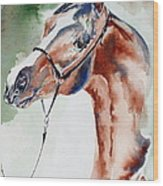 Arabian Stallion Wood Print