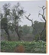 Aransas Nwr Landscape Wood Print