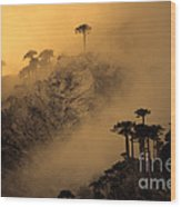 Araucaria Dawn Chile Wood Print