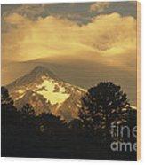 Araucarias At Sunset Wood Print