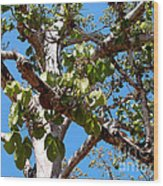 Panama Tree With Flowers Wood Print