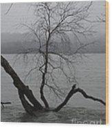 Arbor Island Wood Print