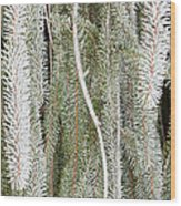 Arboretum Hoar Frost 2 Wood Print