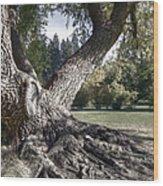 Arboretum Tree Wood Print by Daniel Hagerman