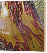 Arbutus Tree Trunk Wood Print