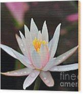 Arc-en-ciel Water Lily Wood Print