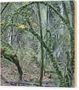 Arch  Bridge Through Trees Wood Print