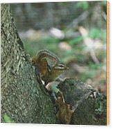 Arched Chipmunk Wood Print