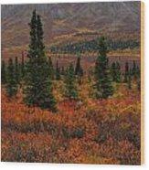 Arctic Color Wood Print