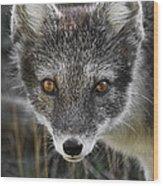 Arctic Fox In Summer Coat Wood Print