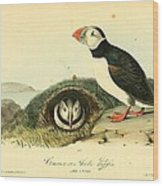 Arctic Puffin Wood Print by Philip Ralley