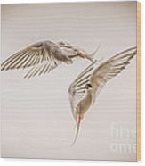 Arctic Tern - Sterna Paradisaea - Pas De Deux -hdr Wood Print