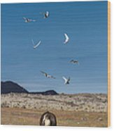 Arctic Terns With Mare And Foal Wood Print