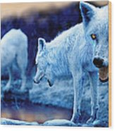 Arctic White Wolves Wood Print