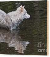 Arctic Wolf In Pond Wood Print