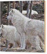 Arctic Wolf Pair Wood Print