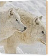 Arctic Wolf Pictures 1081 Wood Print