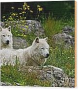 Arctic Wolf Pictures 1128 Wood Print
