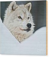 Arctic Wolf Pictures 1144 Wood Print