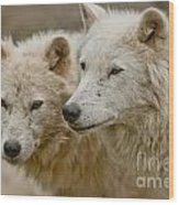 Arctic Wolf Pictures 1174 Wood Print