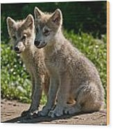 Arctic Wolf Pictures 346 Wood Print