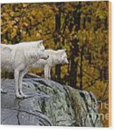 Arctic Wolf Pictures 930 Wood Print