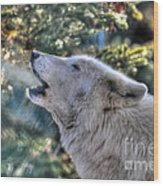 Arctic Wolf Song Wood Print